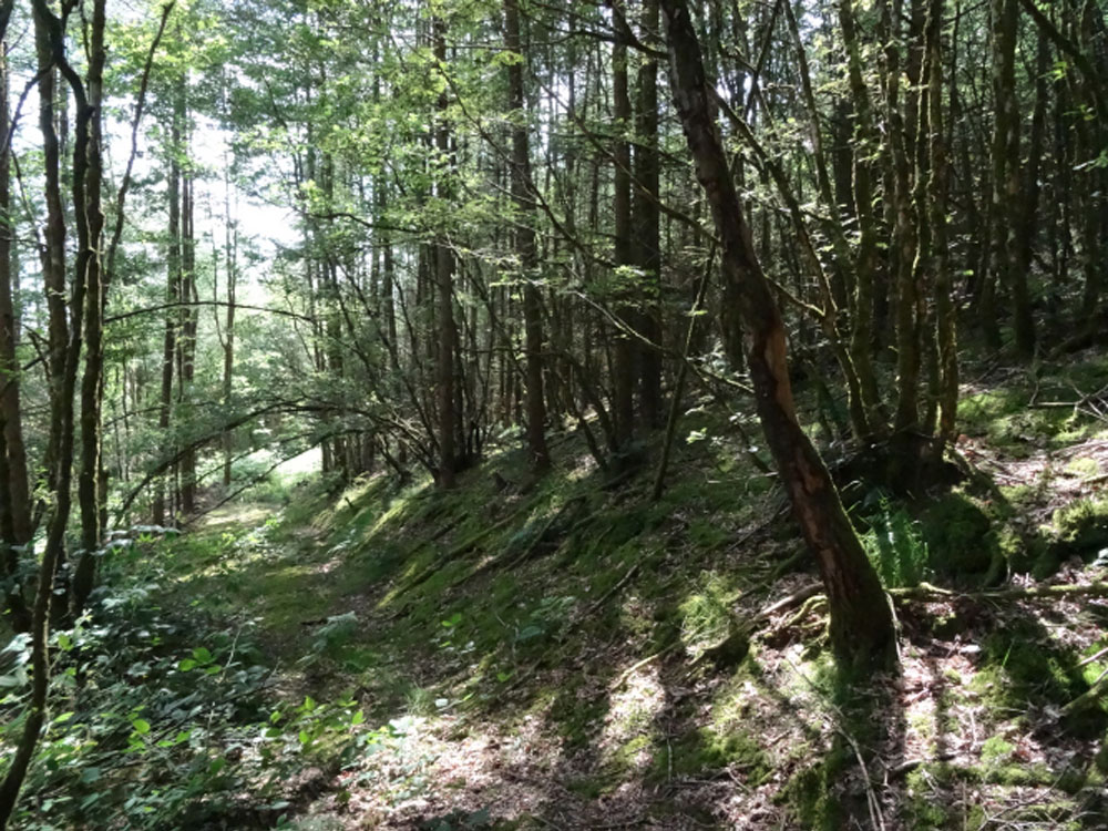 Sparrow Copse, 4.42 acres of conifers and semi-natural oak near Llandovery, Carmarthenshire, South Wales for £27,500 freehold