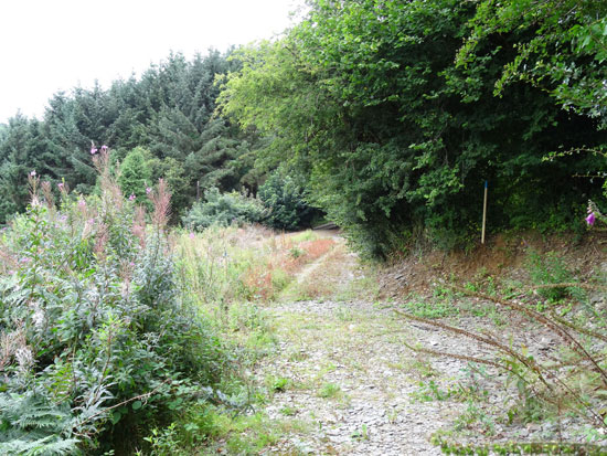 Green Meadow Wood, Cwmpengraig, Drefach Felindre, Carmarthenshire. A delightful productive oak wood of about 7.4 acres with car access above a pretty hamlet in rolling South Wales countryside. Freehold for £35,000
