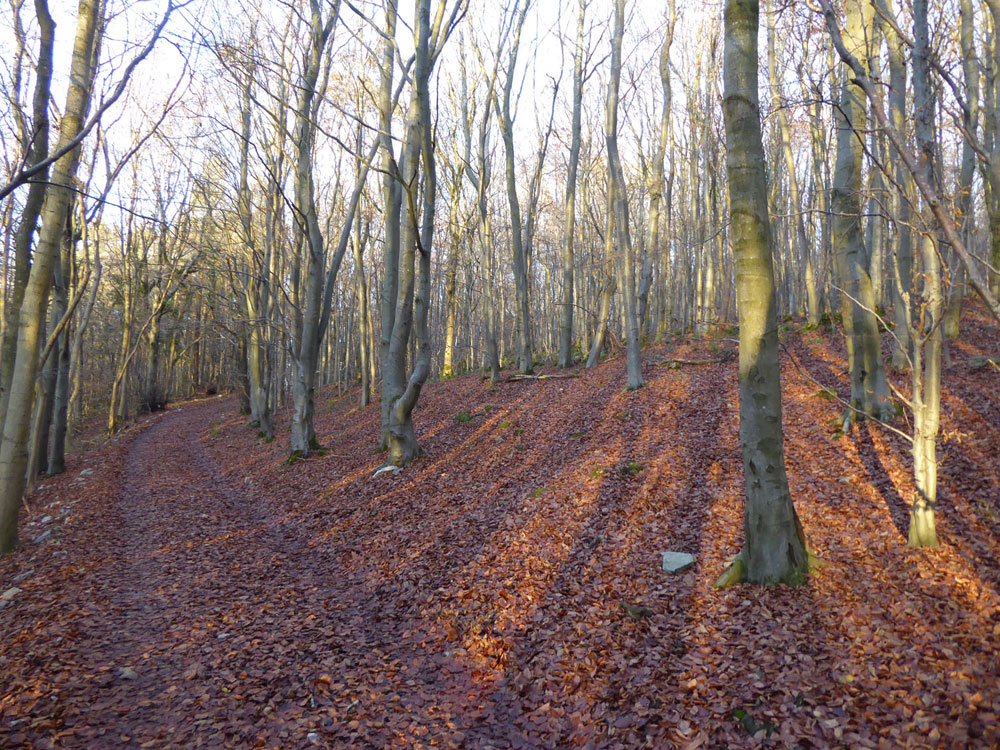 Charm Wood. 3.24 acres of mid-rotation hardwoods near Mold, Denbighshire for £26,000 (freehold)